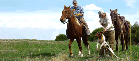 Bird Dog Training Gear - Shop the gear that Stands Up to Tough Field Conditions