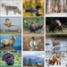 North American Wildlife Calendar - 2020
