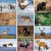 Wildlife Portraits Calendar - 2020