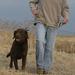 Avery, Standard Dog Leash