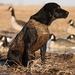 Avery, Standard Dog Parka, KW-1