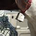 FieldKing True Tone Dog Bell, Brass
