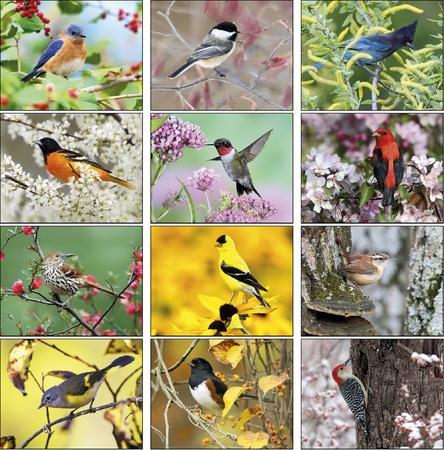 Birds 2021 Imprinted Calendars