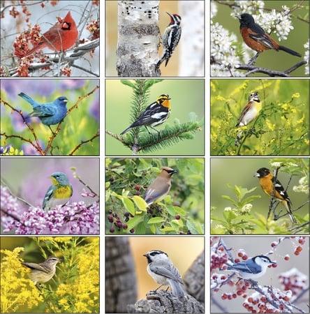 Birds 2022 Imprinted Calendars