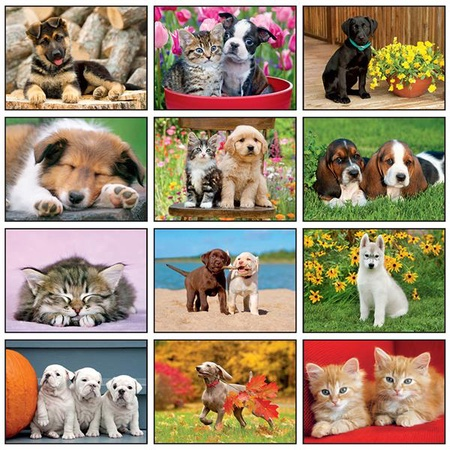 Four Paws Promotional Wall Calendars - 2021