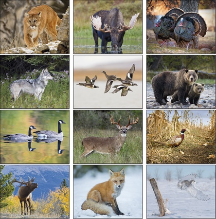North American Wildlife 2021 Promotional Wall Calendars