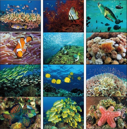 Ocean Glory Calendar - 2020