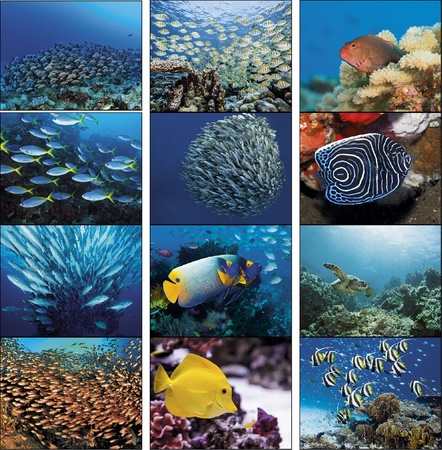 Ocean Glory Personalized 2021 Calendars