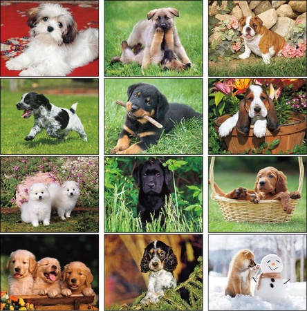 Puppies Calendar - 2020