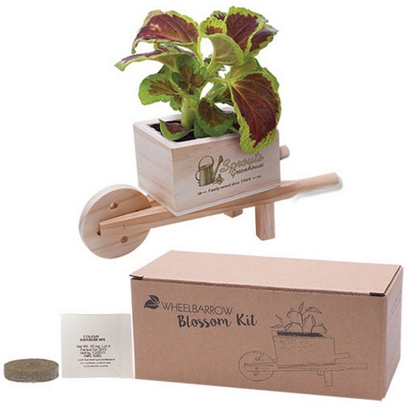 Wooden Wheel Barrow Blossom Kit