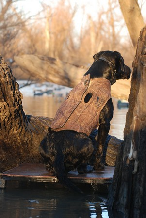 Avery, Boater's Dog Parka, BuckBrush