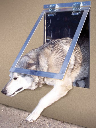 Big Dog Door
