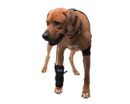 Caldera, Carpal Pet Therapy Wrap, Carpel/Elbow with Therapy Gel, Large