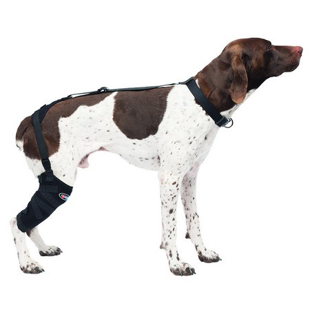 Caldera, Tall Stifle Pet Therapy Wrap with Therapy Gel, Medium