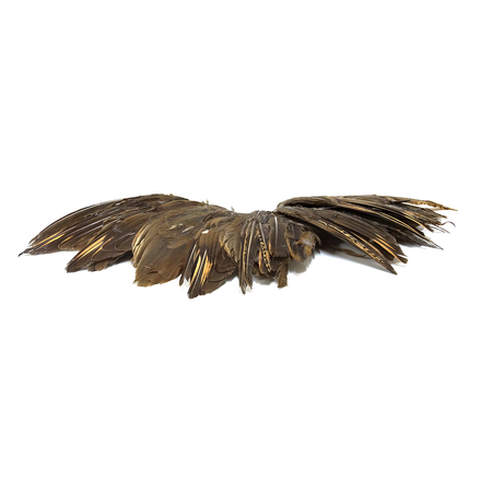 Chukar Wings