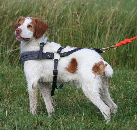Padded Roading Harness
