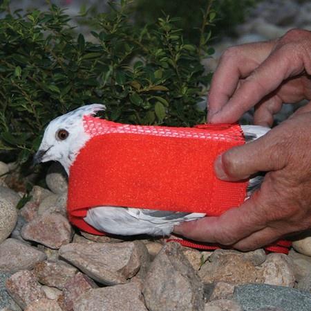 Pigeon Sock