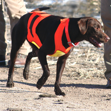 Scott, Canine Field Vest